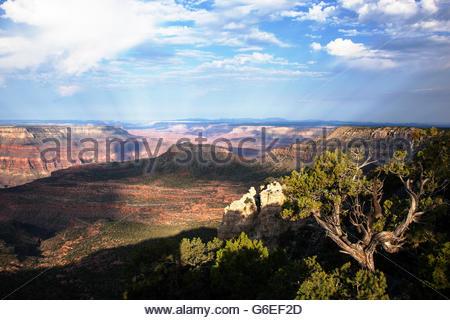 Vue depuis Crazy Jug Point North Rim Grand Canyon National Park Arizona Banque D'Images
