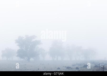 Tôt le matin, promenade dans la campagne le long de ligne de clôture dans le brouillard et le gel. Faible visibilité