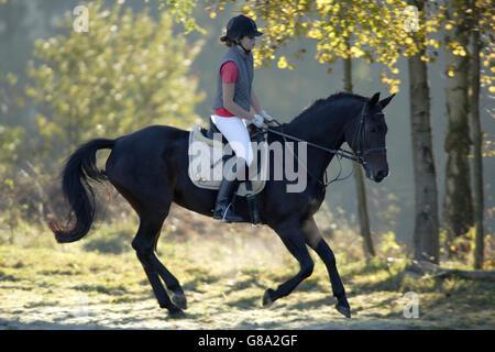 Jeune fille, 17 ans, école son cheval, à l'automne Banque D'Images