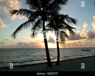 Deux palmiers sur un fond coucher de soleil - silhouette de palmiers sur la plage Banque D'Images