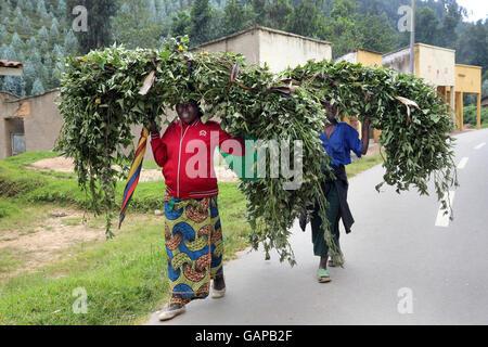 Les branches avec des feuilles fraîches pour nourrir leurs animaux sont transportés sur la tête de deux femmes, Banque D'Images