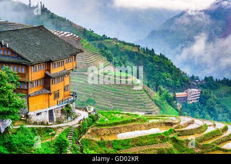 Yaoshan Mountain, Guilin, Chine rizières en terrasses à flanc de paysage. Banque D'Images