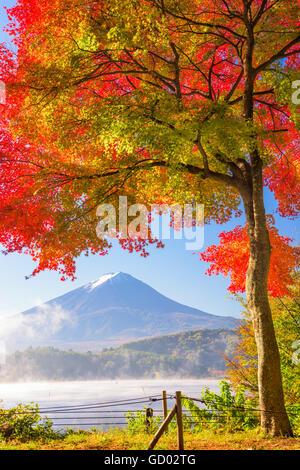 Mt. Fuji, au Japon, du lac Kawaguchi dans la saison d'automne. Banque D'Images