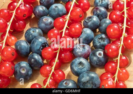 Groupe de myrtilles et de groseille rouge placé sur un plat d'or blanc avec fond isolé. Banque D'Images