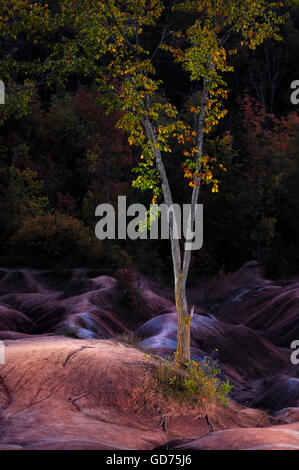 Lonely tree sur l'érosion des sols d'argile rouge, Cheltenham Badlands, Ontario, Canada Banque D'Images