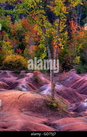 Des arbres sur l'érosion des sols d'argile rouge, automne, Cheltenham Badlands, Ontario, Canada Banque D'Images
