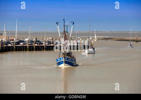 Bateaux de crevettes dans le port, Greetsiel, Leybucht, Krummhoern, Frise orientale, Basse-Saxe, Allemagne, Europe Banque D'Images
