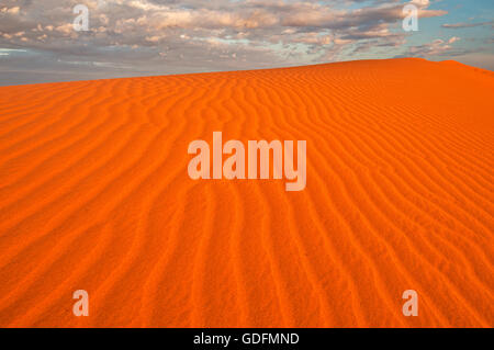 Dunes rouges du désert de Simpson brillants dans le lever du soleil. Banque D'Images