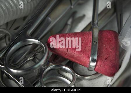 Marteau réflexe rouge sur les ciseaux Banque D'Images