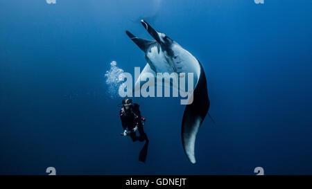 Plongée sous-marine nager avec les raies manta géantes Banque D'Images