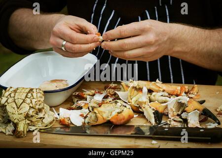Portrait d'un chef de la préparation d'un crabe. Banque D'Images