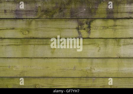 Mur en bois recouverte d'algues vertes de l'image d'arrière-plan Banque D'Images