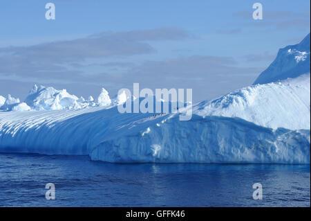 Gamla (Pygoscelis antarctica) sur un iceberg dans l'océan du sud près de l'archipel des Orcades du Sud. Banque D'Images