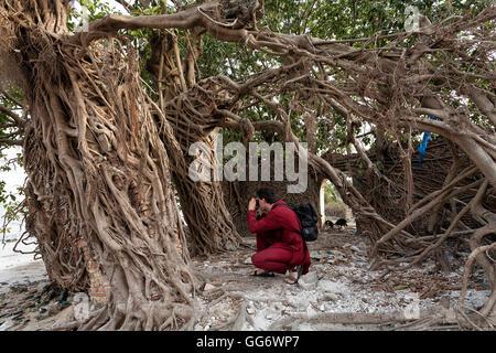 Les touristes de prendre des photographies, des racines d'arbre couvrant les murs d'une vieille maison à Elinkine, Banque D'Images