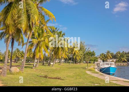 Une ligne de Palmiers Virgin Gorda Îles Vierges Britanniques Banque D'Images