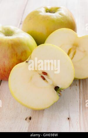 Bramley pommes reinettes ou Malus domestica 'Bramley's Seedling' une variété britannique populaire pour faire des Banque D'Images