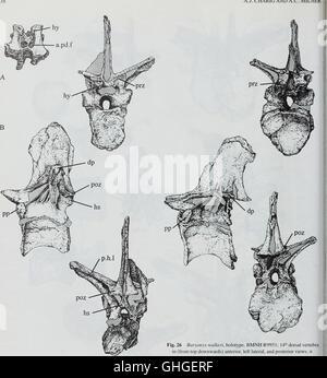 Bulletin du Musée Histort naturelles. Série Géologie (1996)