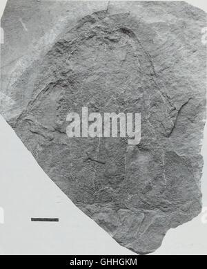 Bulletin du Musée Histort naturelles. Série Géologie (1998)