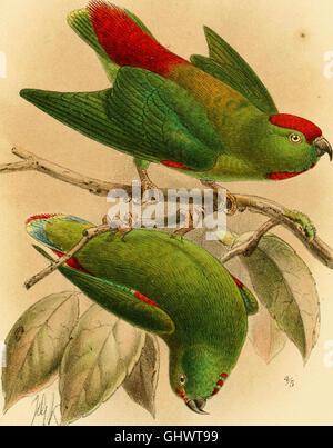 Catalogue des oiseaux dans le British Museum (1874) Banque D'Images