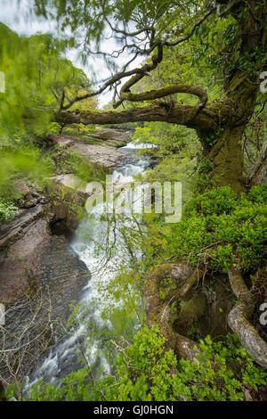 Sgwd Clun-Gywn Cascade, parc national de Brecon Beacons, Pays de Galles, Royaume-Uni