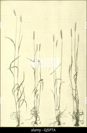 Bulletin du Ministère de l'Agriculture des États-Unis (1920)