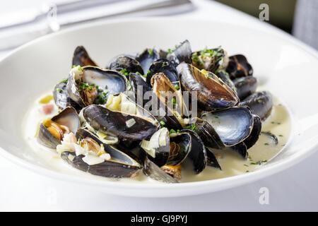 Moules marinière moules, servi sur assiette blanche dans le