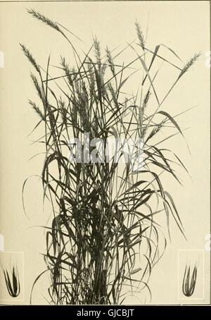 Le livre de graminées - un guide illustré de la politique commune de l'herbe, et la plus commune des joncs et des Banque D'Images