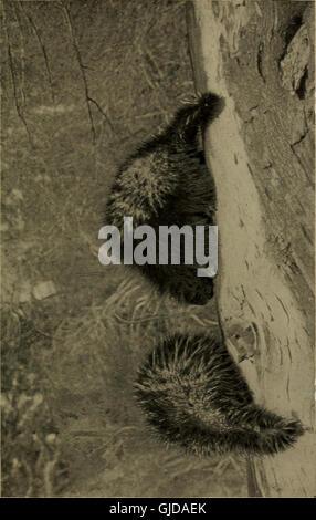 Bien connaître la vie au champ et forêt; les animaux, les oiseaux, les grenouilles et salamandres, (1898)