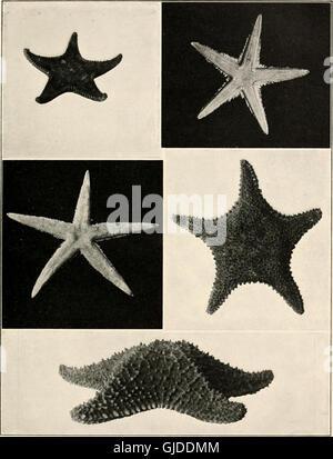 La mer-plage à reflux - un guide pour l'étude de l'algue et la basse de la vie animale trouvés entre zone Tidemarks (1901)