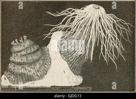 Éléments de biologie; un texte utile-livre de corréler la botanique, la zoologie et la physiologie humaine ((c1907))