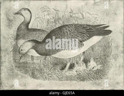 Clé d'oiseaux de l'Amérique du Nord. Contenant des indications succinctes sur chaque espèce d'oiseau vivant et fossile connu à l'heure actuelle du continent au nord de la frontière du Mexique et des États-Unis, y compris