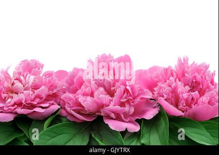 Fleur plante isolée