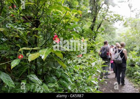Monteverde Cloud Forest, un groupe de personnes marchant dans la forêt de nuages, Monteverde, Costa Rica, Amérique Banque D'Images