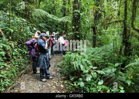 Groupe Touristique, forêt nuageuse de Monteverde, Costa Rica Amérique Centrale Banque D'Images