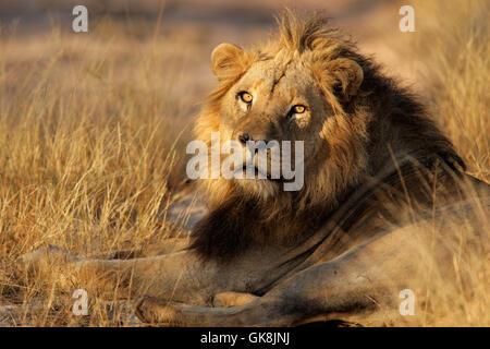 Afrique animal homme Banque D'Images