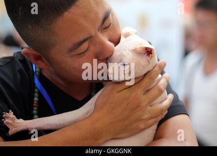 Shenyang, province de Liaoning en Chine. 20e Août, 2016. Un homme embrasse son chat sur un chat exposition à Shenyang, Banque D'Images