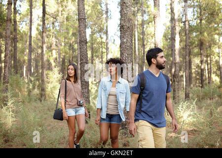 Trois amis se promener tranquillement à travers une pinède en fin d'après-midi soleil tout en portant des vêtements Banque D'Images
