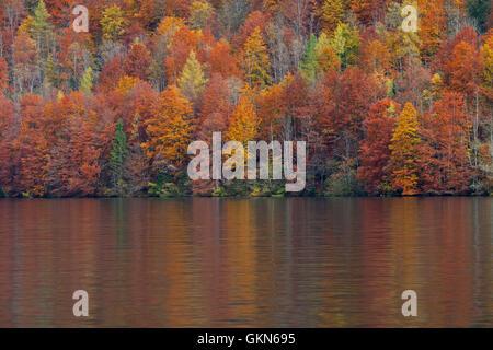 Forêt mixte montrant le feuillage des arbres à feuilles caduques dans les couleurs d'automne le long du lac Banque D'Images