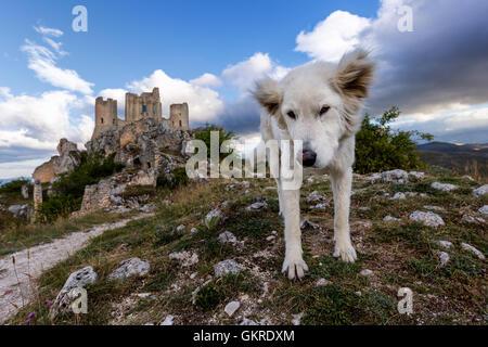 Un berger de Maremme en face de Rocca Calascio, Gran Sasso, Abruzzo, Italie Banque D'Images