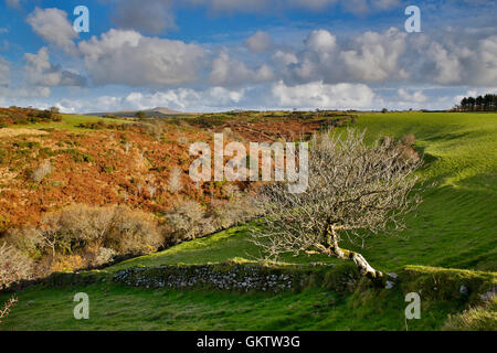 Devil's Leap; Brown Willy; lointain Bodmin Moor, Cornwall, UK Banque D'Images