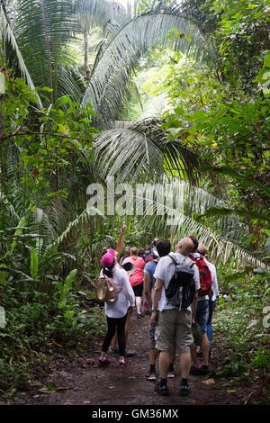 Les touristes marcher en forêt, parc parc national Carara, Costa Rica, Amérique Centrale Banque D'Images