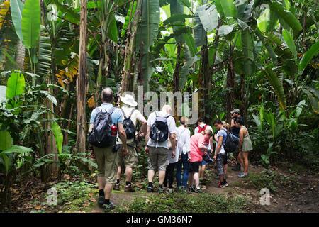Les touristes sur une visite guidée dans la forêt tropicale du Costa Rica, le Parque Carara ( Parc National Carara Banque D'Images