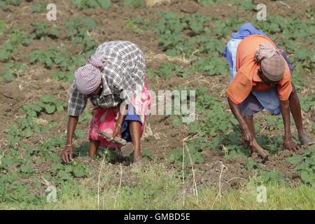 Deux femmes travailleurs de l'agriculture terre Banque D'Images