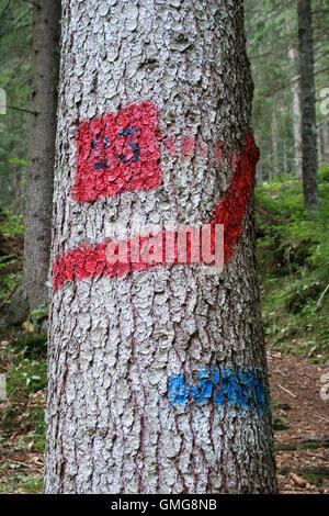 Un itinéraire mark peint sur un arbre à côté d'un sentier de grande randonnée à travers une forêt dans les Dolomites, Banque D'Images