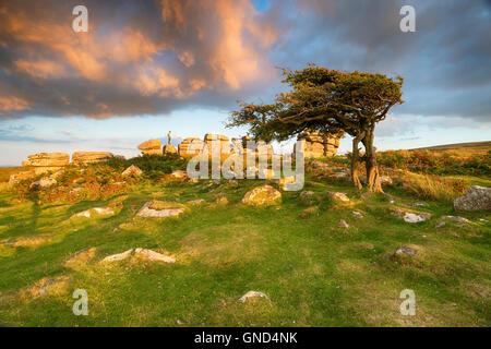 Belle lumière du soir et un ciel dramatique plus Combestone Hexworthy près de Tor sur le parc national du Dartmoor Banque D'Images