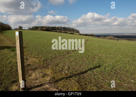Sentier signe et couper le chemin par étapes d'un champ de blé d'hiver sur le North Wessex Downs en Février Banque D'Images