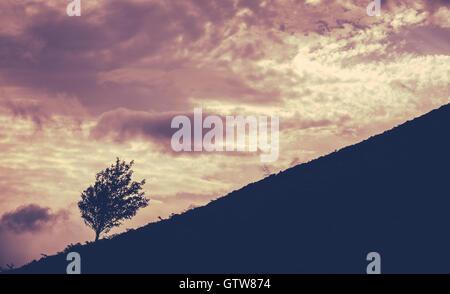 Un arbre isolé sur une colline Against A Sunset Banque D'Images