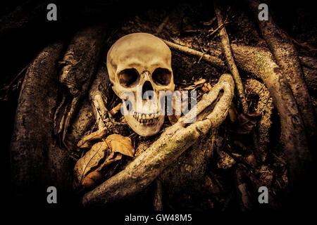 Crâne humain sur fond d'horreur,ruines place pour Halloween Concept et Projet d'affiche de film Banque D'Images