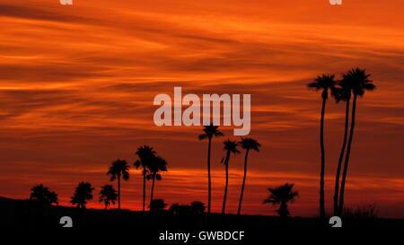 Ciel et enfer rouge profond orange bordée de palmiers silhouette contre le ciel du désert Banque D'Images