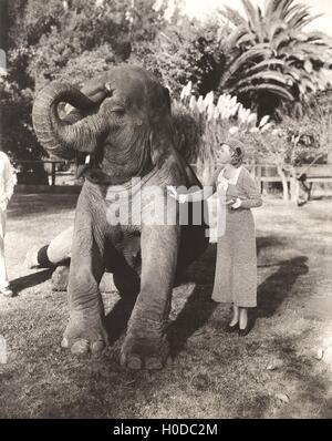 Jeune femme caressant l'éléphant au zoo Banque D'Images